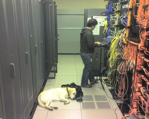 data center dog